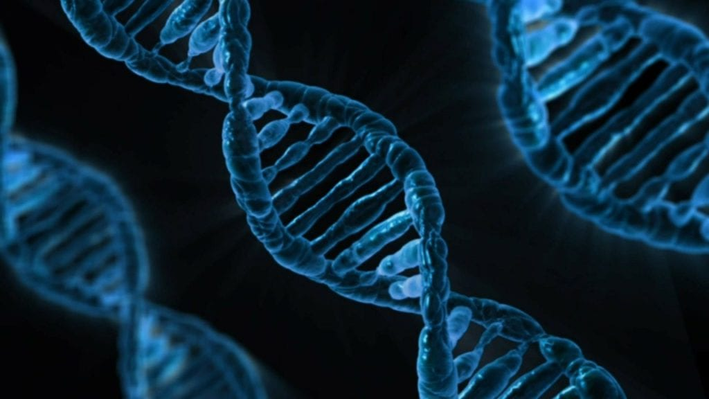 slow DNA aging process