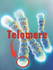 what is telomere